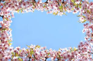 桜のフレームと青空の写真素材 [FYI00474731]