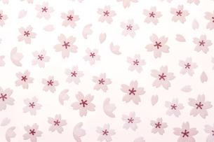 立体的な桜の花の写真素材 [FYI00474736]