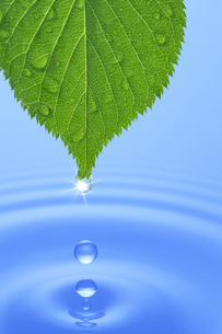 葉っぱと水滴の素材 [FYI00474764]