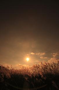 曽爾高原のススキと夕日の写真素材 [FYI00474838]