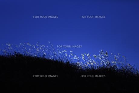 曽爾高原のススキの写真素材 [FYI00474857]