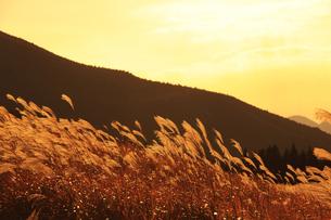 曽爾高原のススキの写真素材 [FYI00474858]