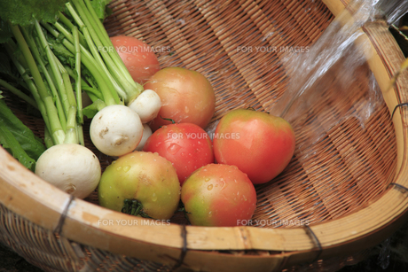 水で洗うカブとトマトの写真素材 [FYI00474861]