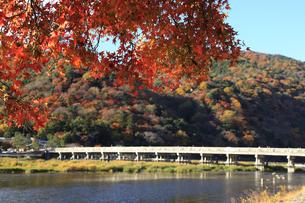 紅葉と渡月橋の素材 [FYI00474879]