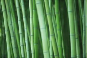 竹林の素材 [FYI00474896]
