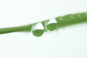 草と水滴の写真素材 [FYI00474993]