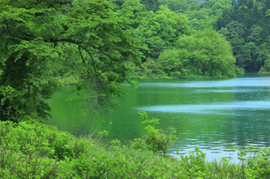 余呉湖湖畔の写真素材 [FYI00475034]
