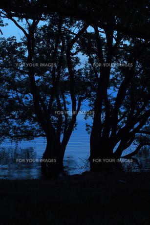 琵琶湖湖畔の朝の写真素材 [FYI00475038]