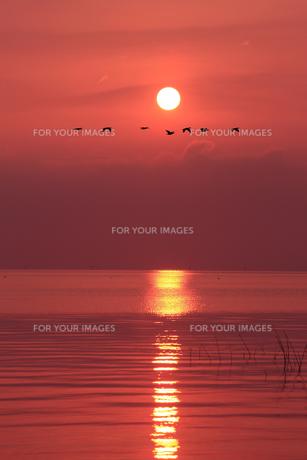 琵琶湖湖畔の朝の写真素材 [FYI00475041]