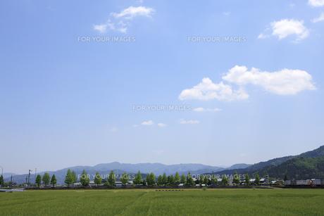 麦畑の写真素材 [FYI00475049]