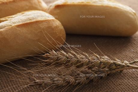 パンと小麦の写真素材 [FYI00475117]