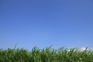 草と青空の写真素材 [FYI00475141]