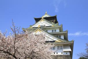 ソメイヨシノと大阪城天守閣の写真素材 [FYI00475142]