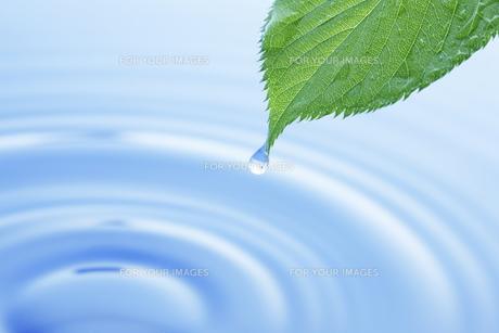 桜の若葉と水の写真素材 [FYI00475165]