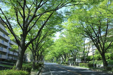 ケヤキ通りの写真素材 [FYI00475171]