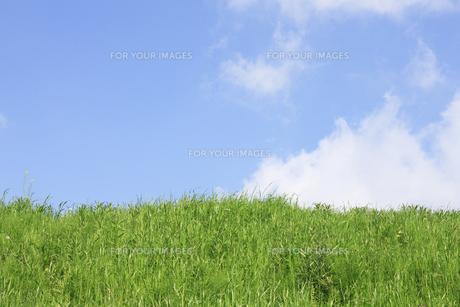 草原と青空の写真素材 [FYI00475190]
