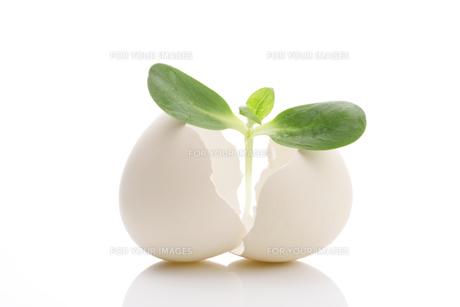 卵と二葉の写真素材 [FYI00475195]