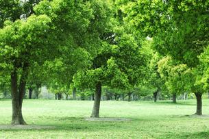 公園の木々の写真素材 [FYI00475202]