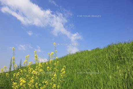 草原と青空の写真素材 [FYI00475203]