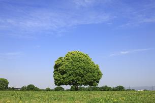 河川敷の1本の木の写真素材 [FYI00475219]