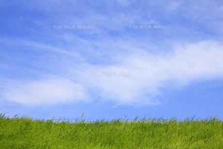草原と青空の写真素材 [FYI00475221]