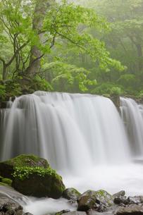奥入瀬渓流の霧の銚子大滝の写真素材 [FYI00475330]