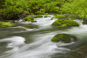 奥入瀬渓流の写真素材 [FYI00475352]