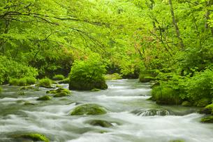 奥入瀬渓流の写真素材 [FYI00475356]