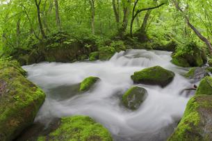 奥入瀬渓流の写真素材 [FYI00475360]