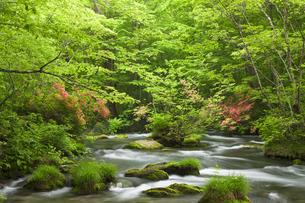 奥入瀬渓流の写真素材 [FYI00475534]