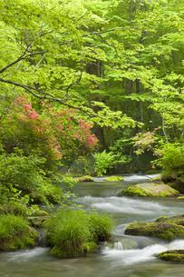 奥入瀬渓流の写真素材 [FYI00475539]