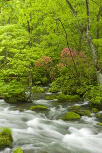 奥入瀬渓流の写真素材 [FYI00475540]