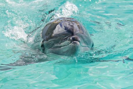 イルカの写真素材 [FYI00475549]
