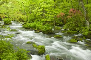 奥入瀬渓流の写真素材 [FYI00475554]