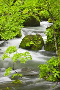 奥入瀬渓流の写真素材 [FYI00475557]