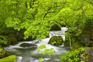 奥入瀬渓流の写真素材 [FYI00475558]
