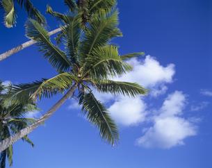 ヤシの木と青空と雲の写真素材 [FYI00475663]
