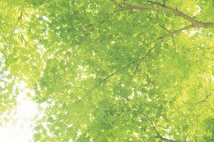 新緑の素材 [FYI00476983]