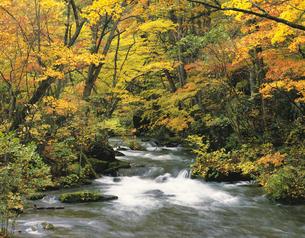 奥入瀬渓流の写真素材 [FYI00476994]