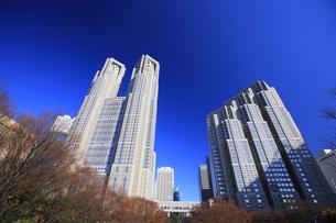 東京都庁周辺の写真素材 [FYI00477844]