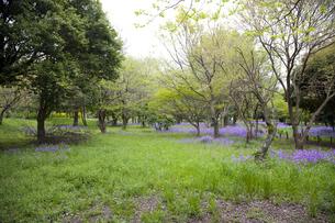 林間に咲き誇る紫の花の写真素材 [FYI00478593]
