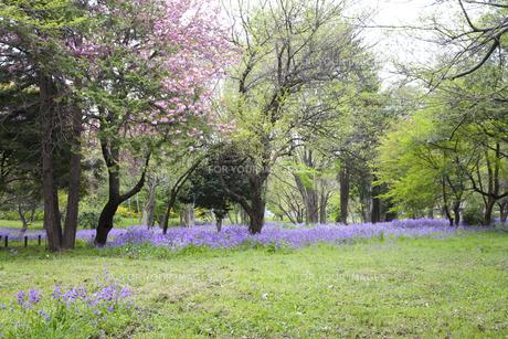 林間に咲き誇る紫の花の写真素材 [FYI00478600]