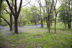 林間に咲き誇る紫の花の写真素材 [FYI00478603]