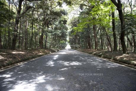 林の中の砂利道の写真素材 [FYI00478626]