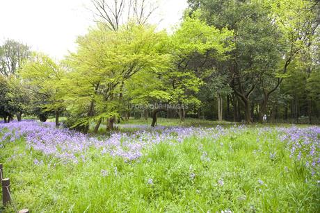 林間に咲き誇る紫の花の写真素材 [FYI00478638]