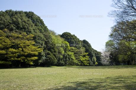 初春の森の写真素材 [FYI00478909]