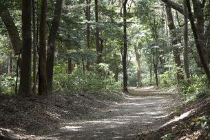 林の中の砂利道の写真素材 [FYI00479044]