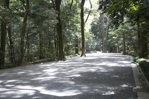 林の中の砂利道の写真素材 [FYI00479055]
