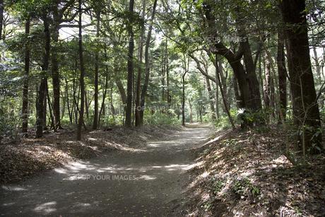 林の中の砂利道の写真素材 [FYI00479060]