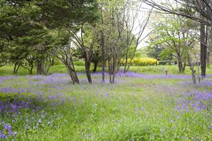 林間に咲き誇る紫の花の写真素材 [FYI00479095]